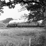 Small but beautiful: The Brockenhurst to Lymington branch is one of the shortest on the network but is crammed with scenic delights. It was also England's last steam-operated branch line. Here Ivatt 2-6-2T No. 41224 approaches Lymington Junction in summer 1966
